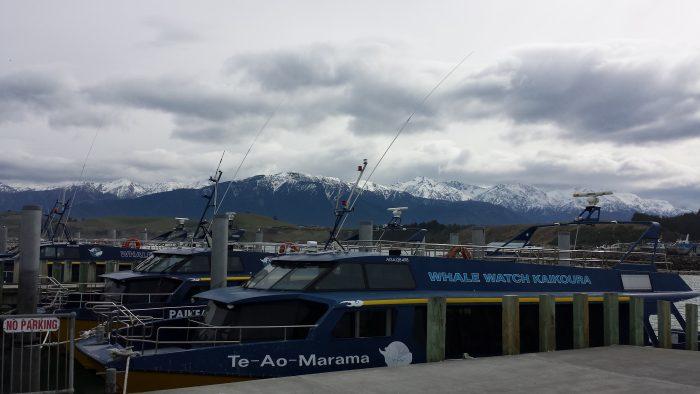 La barca di Whale Watch Kaikoura