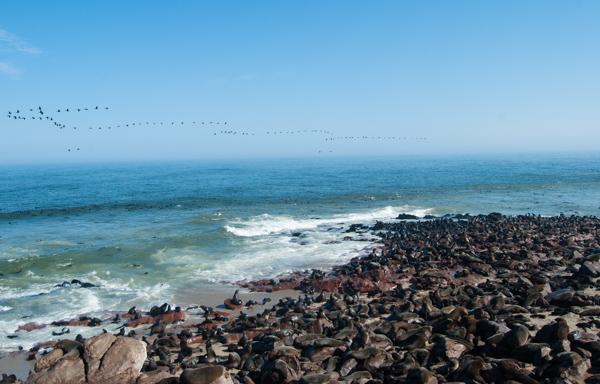 Le otarie a Cape Cross, Namibia