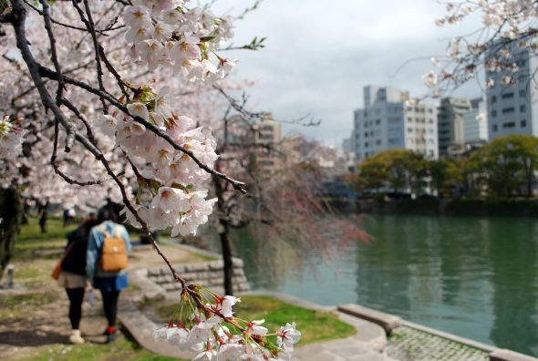 Fioritura dei ciliegi nel Parco della Pace, Hiroshima