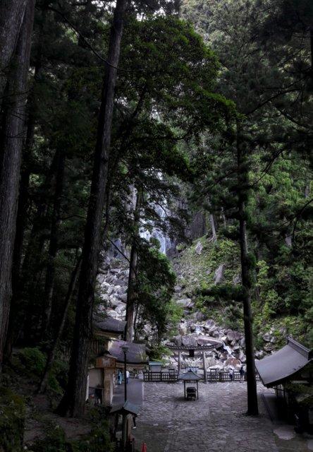 L'arrivo alla cascata di Nachi, fra grandi alberi