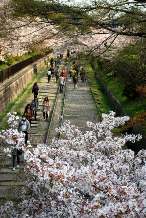 Kyoto durante la fioritura dei ciliegi