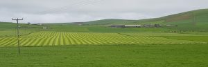 Striped fields