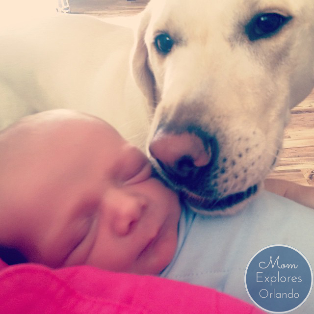 Teaching an Old Dog New Tricks | Mom Explores Orlando