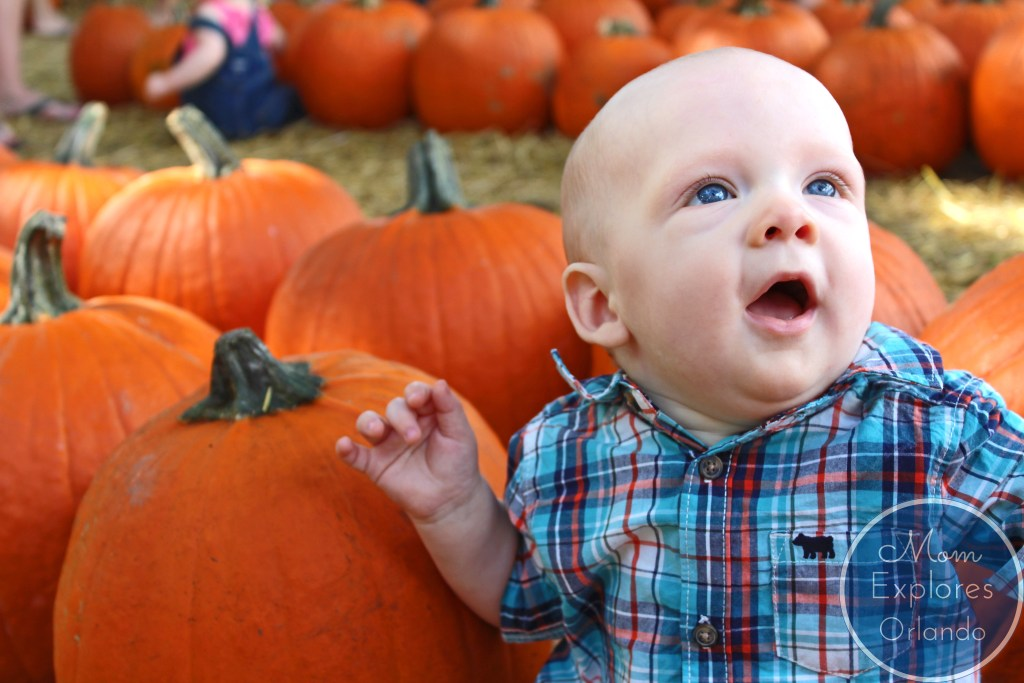 Fall fun in Orlando! This is a great list!