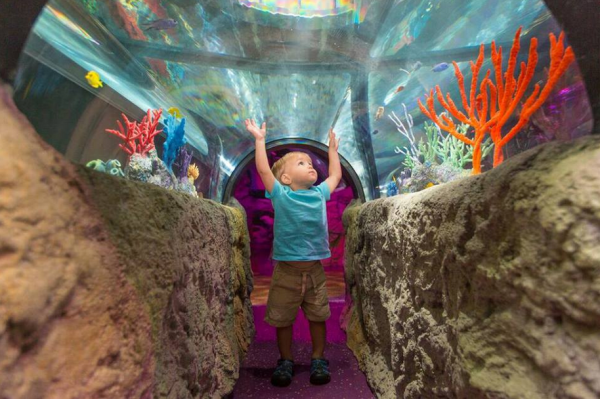 Indoor places for kid to play - image of Sealife Aquarium