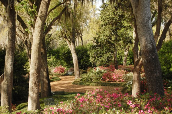 Bok Tower Gardens: image of blooming flowers in the garden