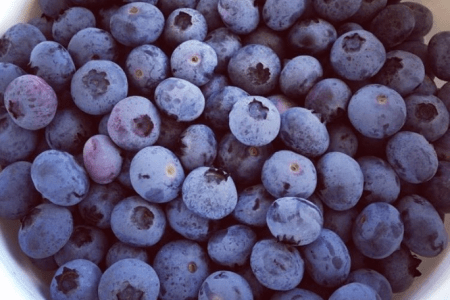 Orlando farms: image of freshly picked blueberries