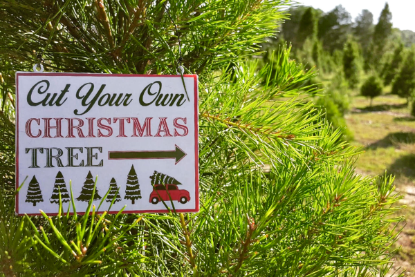 Holiday events in Orlando during Christmas: image of sign at Christmas Tree Farm at Santa's Farm in Eustis where you can cut down your own Christmas tree