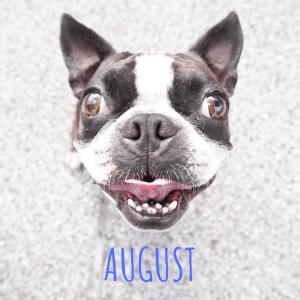 August Orando Dog Events