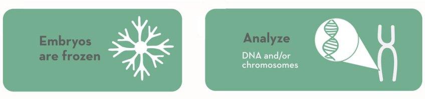 Embryos are frozen / Analyze DNA