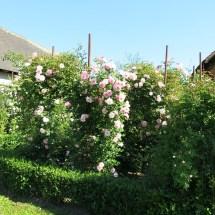 Rosengarten Laafeld 092