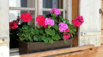Cómo construir una alegre jardinera en la ventana