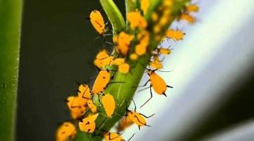 Aprende a reconocer, eliminar y prevenir las plagas de las plantas ornamentales, flores y jardines