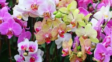 Cómo cuidar orquídeas en casa