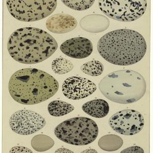 A Variety of Bird Eggs