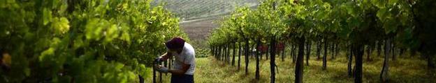 vino-oro-de-castilla