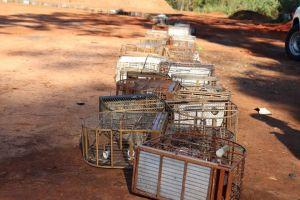 Polícia Ambiental, Secretaria do Verde e Cempas realizam destruição de gaiolas