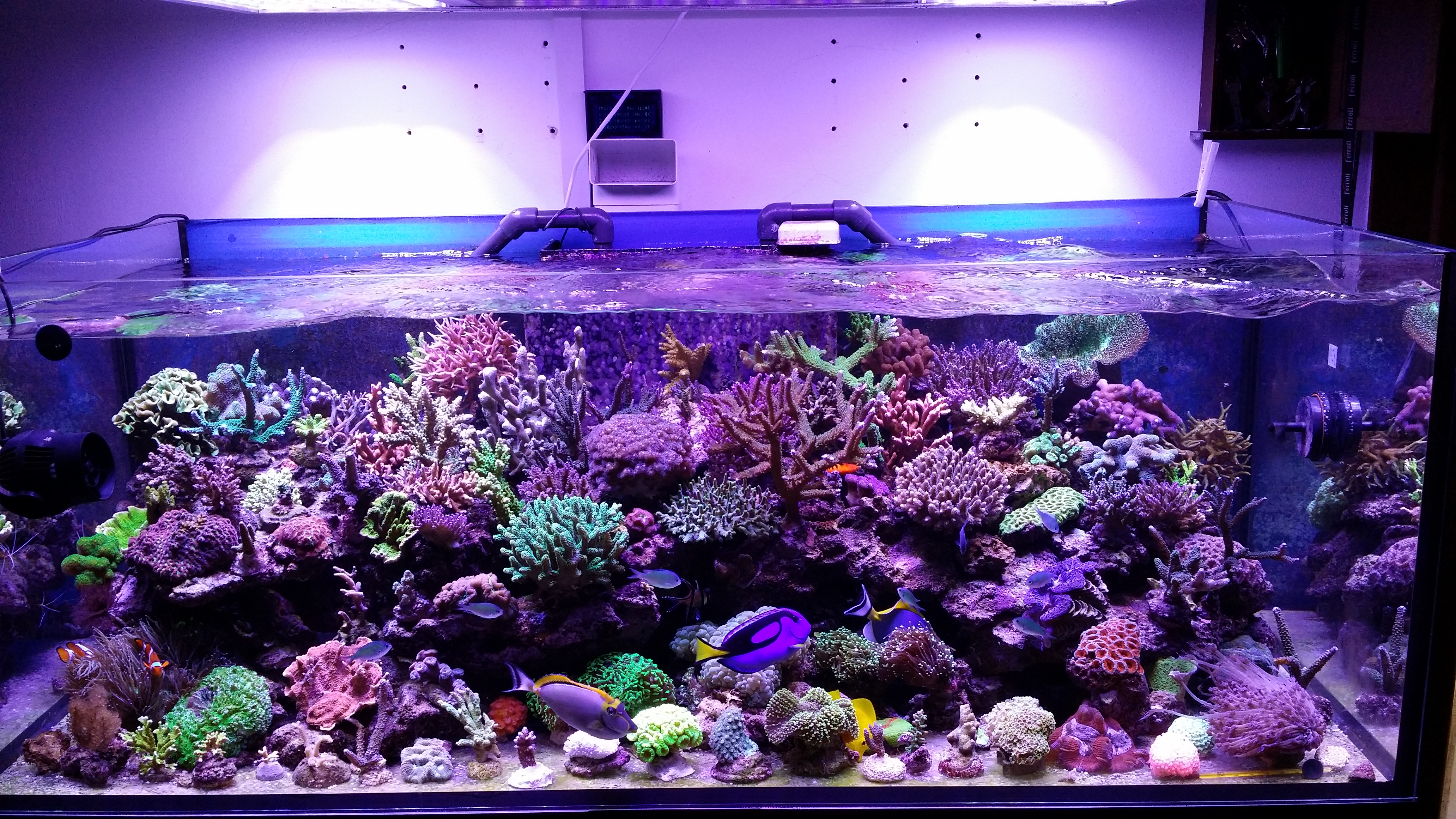 Best Aquarium Led Lighting