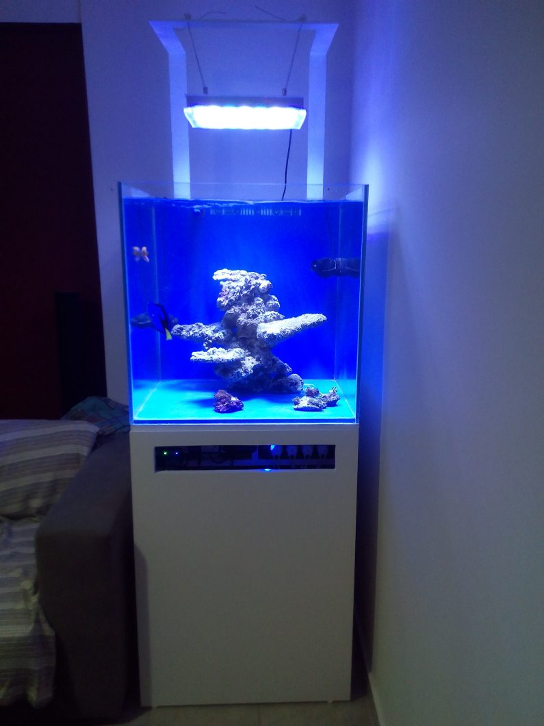 Best Led Reef Lights