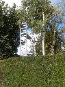 taille-arbre-jardin-orsap-orsapro