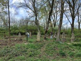 Powoli z zarośli wyłania się stary cmentarz w Sosnowicy