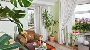 Αυτά είναι τα φυτά θα καθαρίσουν τον αέρα του σπιτιού σας!