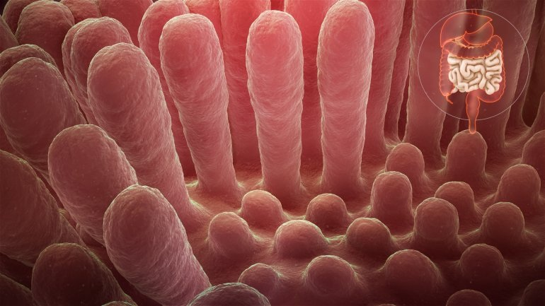Μπορεί ένα ευρέως χρησιμοποιούμενο πρόσθετο τροφίμων να προκαλεί κοιλιοκάκη;