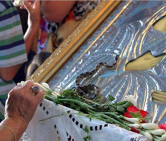 Βγήκαν τα φιδάκια της Παναγίας στην Κεφαλονιά
