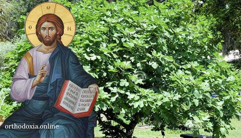 Η Μυστική σημασία και οι συμβολισμοί της άκαρπης συκιάς του Ιησού