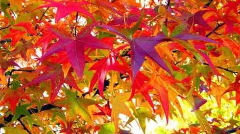 ΕΜΥ: Ο καιρός της Δευτέρας 2 Νοεμβρίου