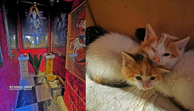 Γατούλα γέννησε στο παρεκκλήσι του Αγίου Παϊσίου | Ελλάδα |  | γάτα | Ελλάδα | orthodoxia.online