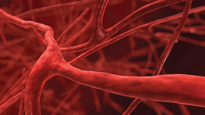 smallest-blood-vessel-body_46b97857ca2f9213