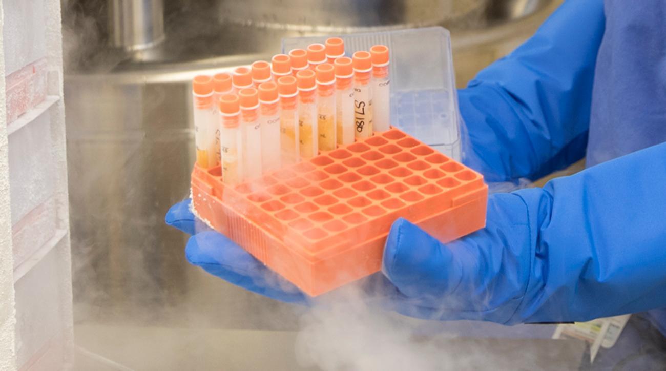 andrews-institute-stem-cells-up-close