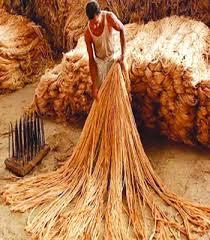 পাট খাত টিকিয়ে রাখা নিয়ে তৈরি হয়েছে শঙ্কা