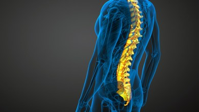 Photo of Regenerating Body Parts: Fat Cells To Stem Cells To Repair Spinal Disc Injuries
