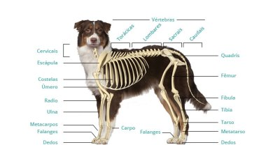 Fraturas de ossos em cães