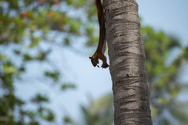 Eichhörnchen - Casa Grande