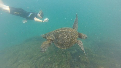 Andreas und Schildkröte