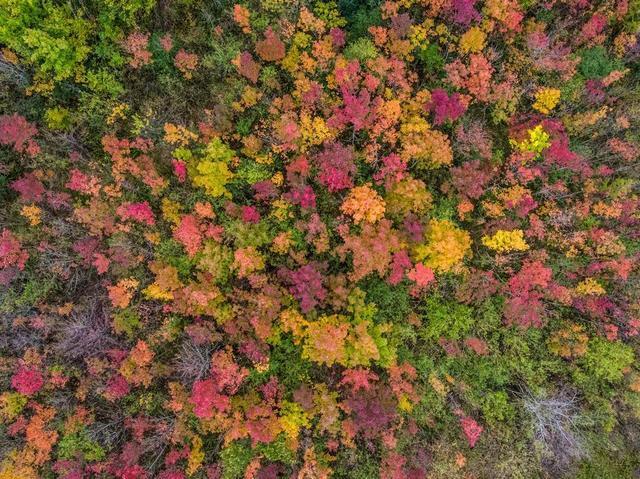 autumn-leaves-on-tree-canopy.jpg