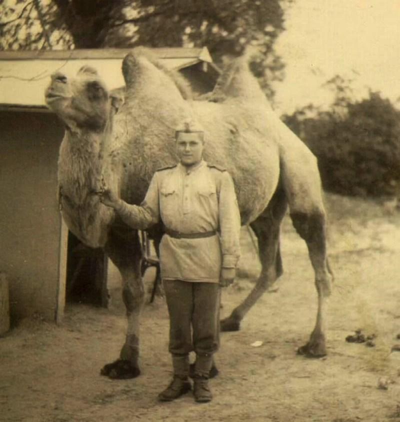 Cuvena kamila Jaska