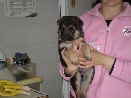 Lupetto in adozione al canile di Orvieto