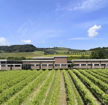 "Ennesimo riconoscimento per i vini d'Orvieto. Vince ""Douja d'Or 2018"" la Bigi spa"