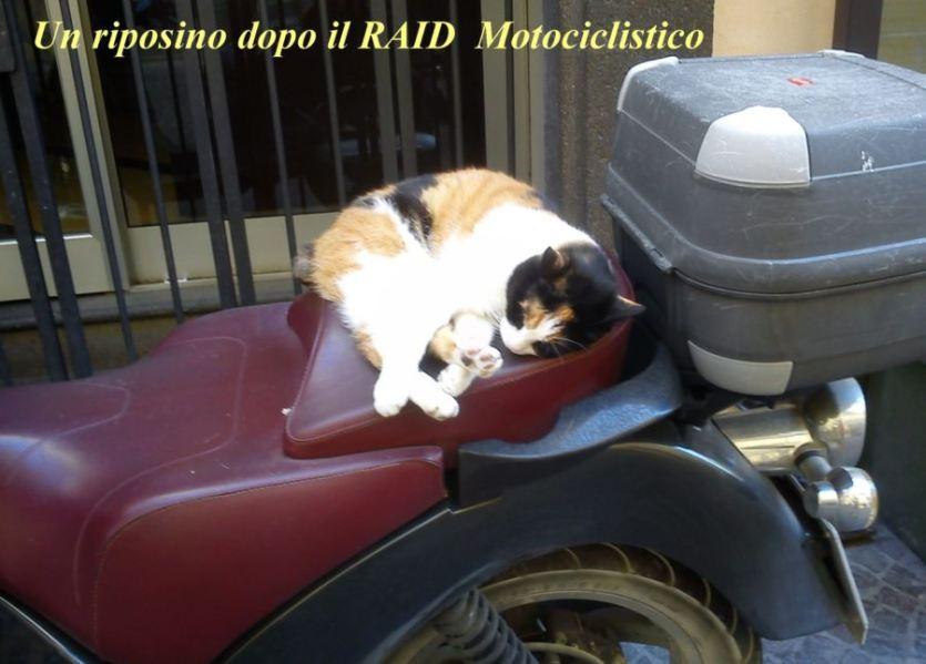 Un riposino dopo il raid motociclistico