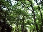 Interventi forestali, fondi alle comunità montane