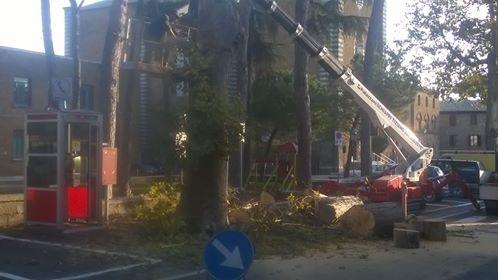 taglio selvaggio degli alberi
