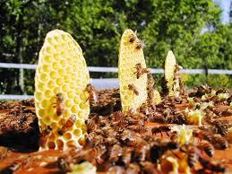 Il Comune di Orvieto è amico delle api
