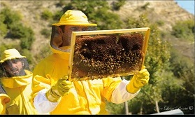 Tutti a scuola di apicoltura biologica con il Museo Naturalistico di Lubriano