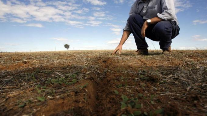 Siccità, nell'Orvietano danni alle colture. Compromessa produzione olio e vino. Produttori in ginocchio