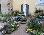17a edizione di Tra pomi e fiori, mostra-mercato a Calvi dell'Umbria dal 26 al 27 agosto