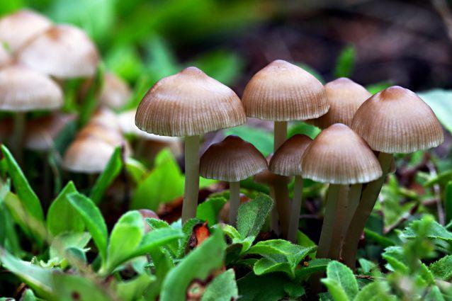 Raccolta funghi, al via i corsi micologici gratuiti per rilascio del tesserino